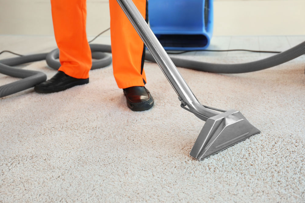 Carpet Cleaning MI